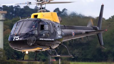 ZJ275 - Aérospatiale Squirrel HT.1 - United Kingdom - Royal Air Force (RAF)