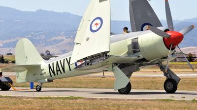 N260X - Hawker Sea Fury Mk.11 - Private