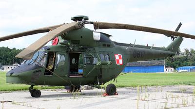 0817 - PZL-Swidnik W-3A Sokol - Poland - Army