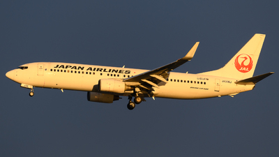 A picture of JA306J - Boeing 737846 - Japan Airlines - © Yoshio Yamagishi