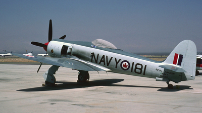 N60SF - Hawker Sea Fury FB.11 - Private