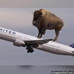 Buffalo.SpotAviation